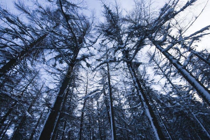зима dublin стоковые изображения rf