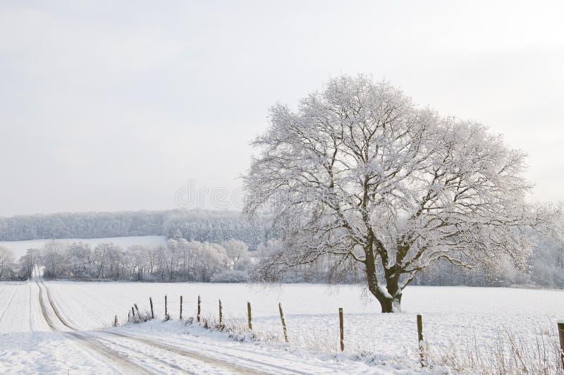 зима landscap стоковые фотографии rf