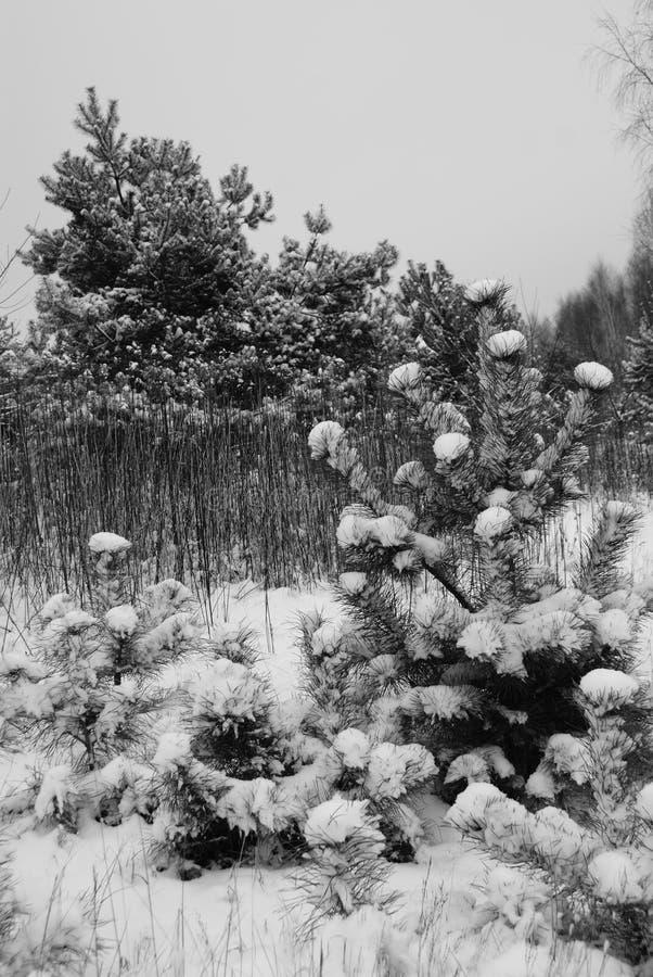 Зима Subcarpathian стоковые фотографии rf