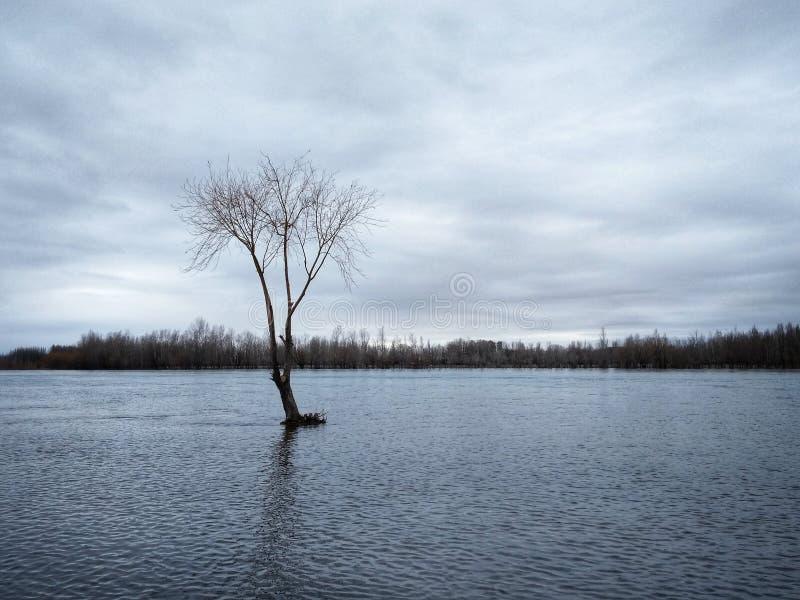 Зимнее время - дерево на воде стоковое фото rf