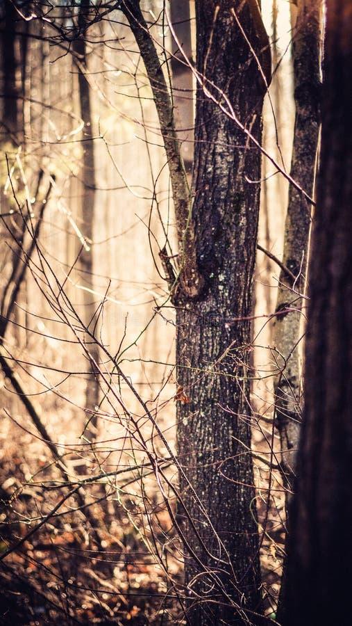 Зимние деревья в Бостоне Массачусетсе стоковое фото rf