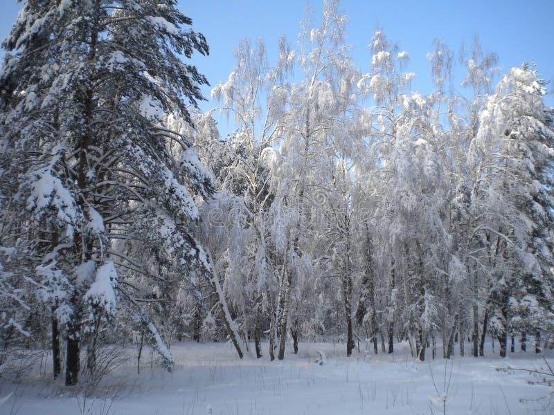 Зимний день, снежный лес, морозные картины на деревьях, голубом ясном небе, пушистом белом снеге, приходя рождестве, гнуть ветвей стоковые изображения rf