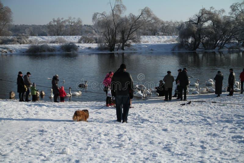 Зимний день на реке стоковые фотографии rf