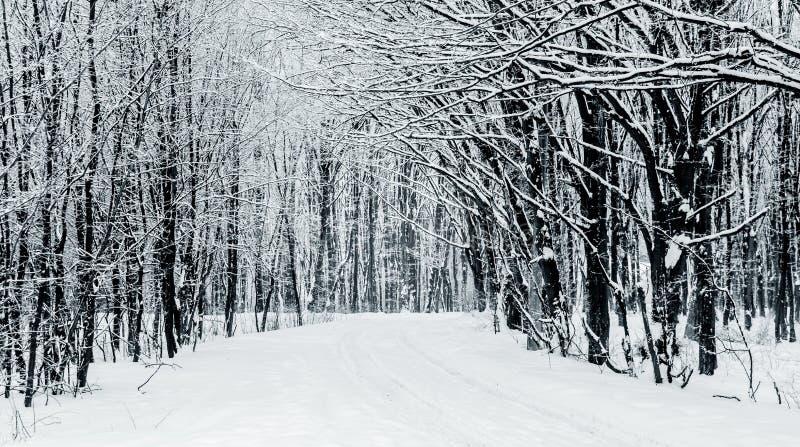 Зимний пейзаж с деревьями и дорогой в лесном, черно-белом изображении_ стоковые изображения