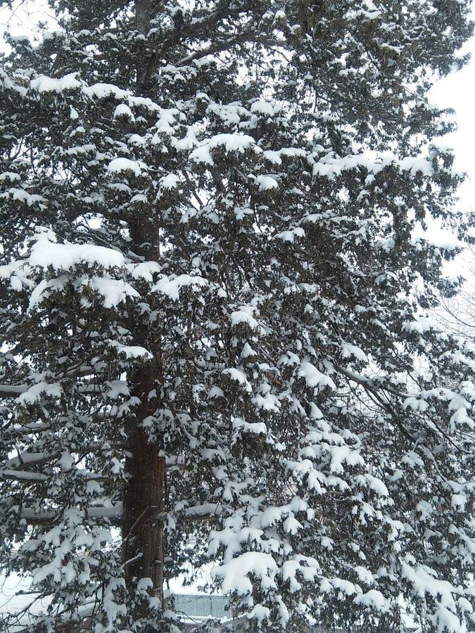 Зимний снег стоковое изображение rf