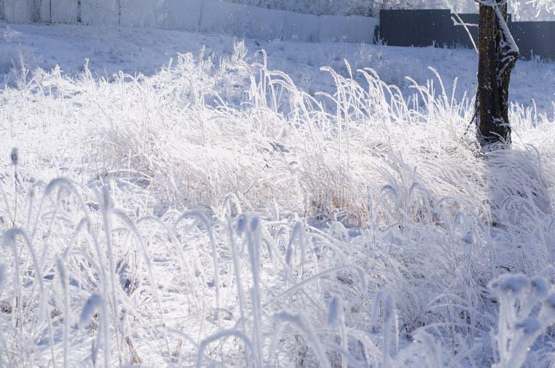 Зимний фон, утренняя мороза на траве с копировальным пространством стоковые изображения