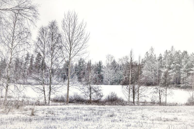 Зимы ландшафта природа деревьев Outdoors красивая стоковая фотография