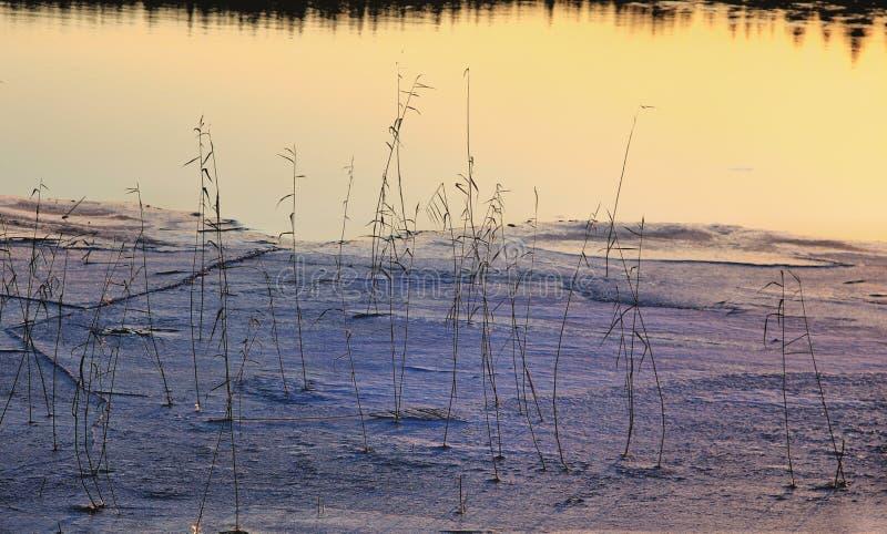 Зим лед озера Outdoors Reeds отражение стоковая фотография