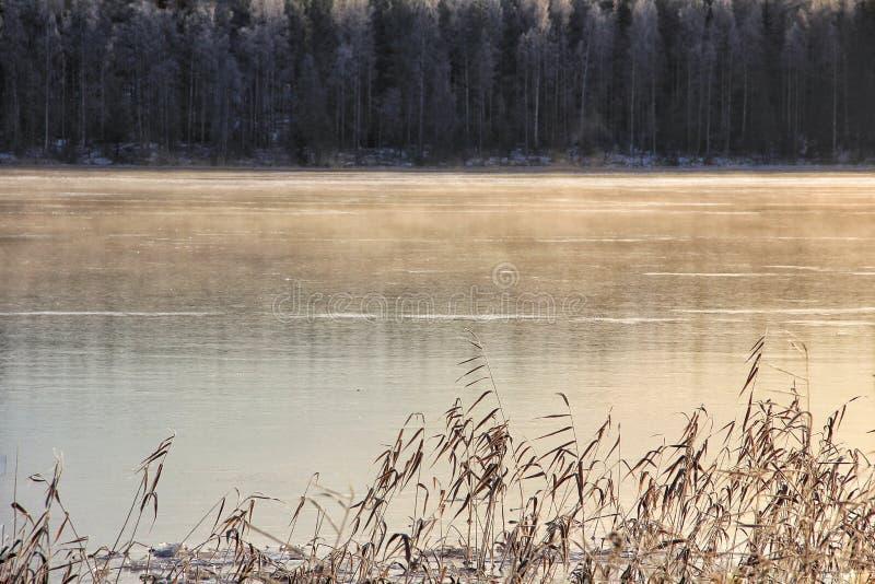 Зим тростники леса льда озера Outdoors стоковое изображение rf