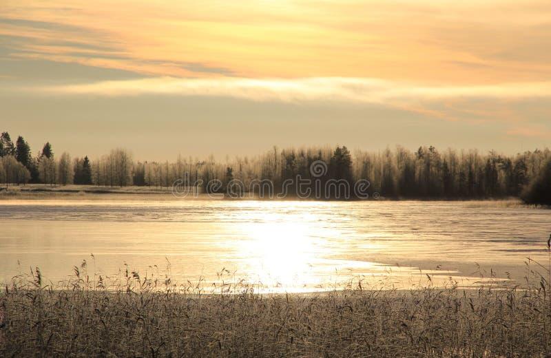 Зим тростники леса льда озера Outdoors стоковое фото rf