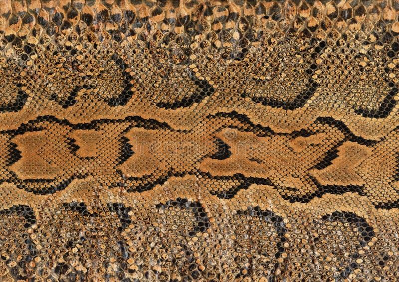 змейка кожи стоковые фотографии rf