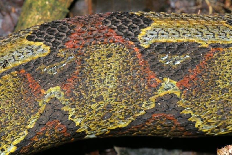 змейка кожи стоковые изображения