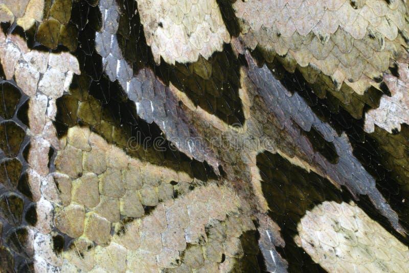 змейка кожи стоковое фото rf