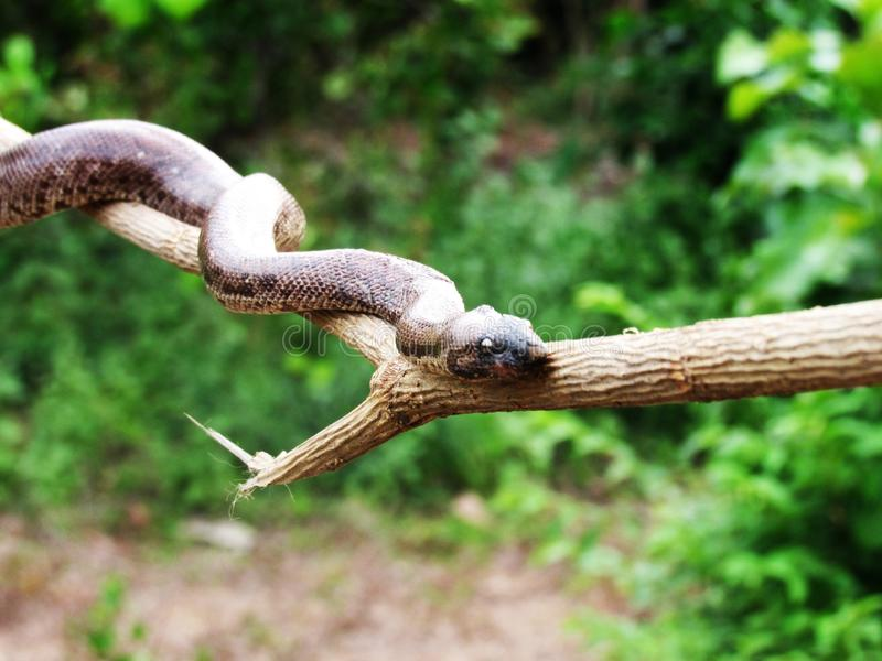 Змейка на древесине стоковая фотография