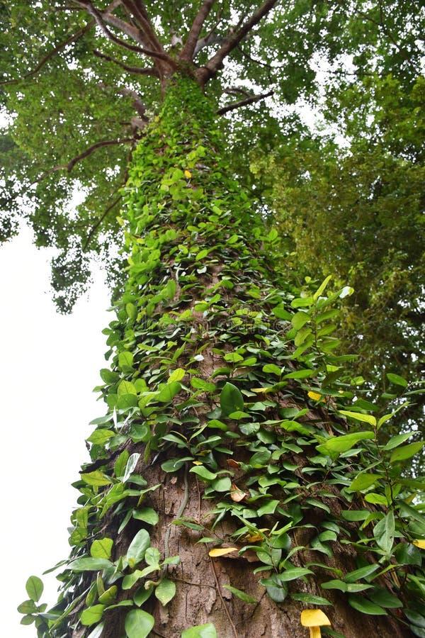 Змейка на тропическом дереве стоковое фото