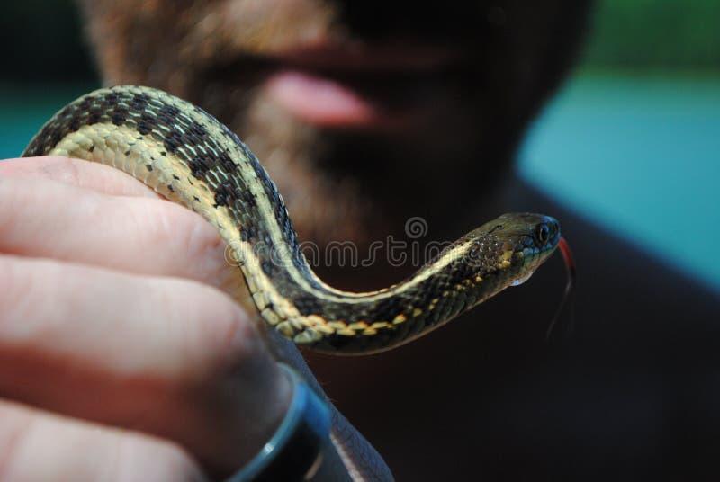 змейка человека удерживания стоковая фотография rf