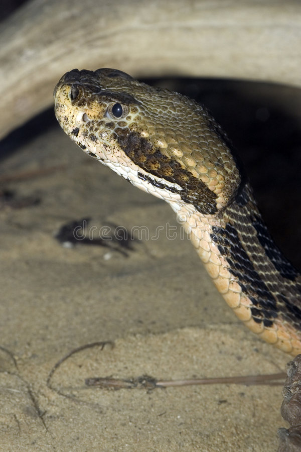 Download змейка стоковое изображение. изображение насчитывающей змейка - 84833