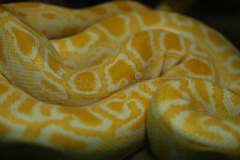 Змейка стоковые изображения rf