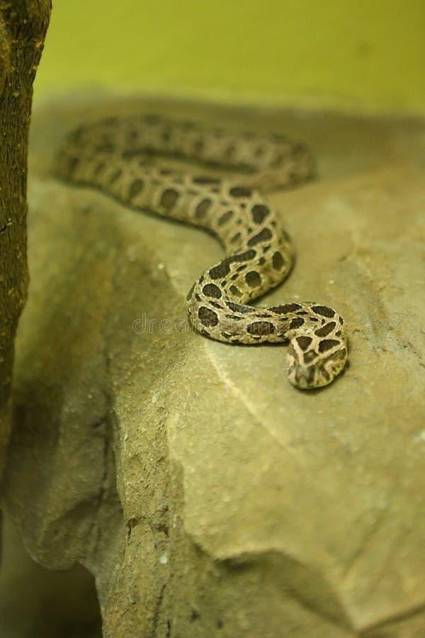 Змейка стоковое изображение rf