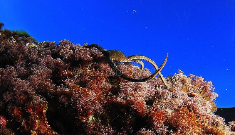 Змей звезды стоковая фотография