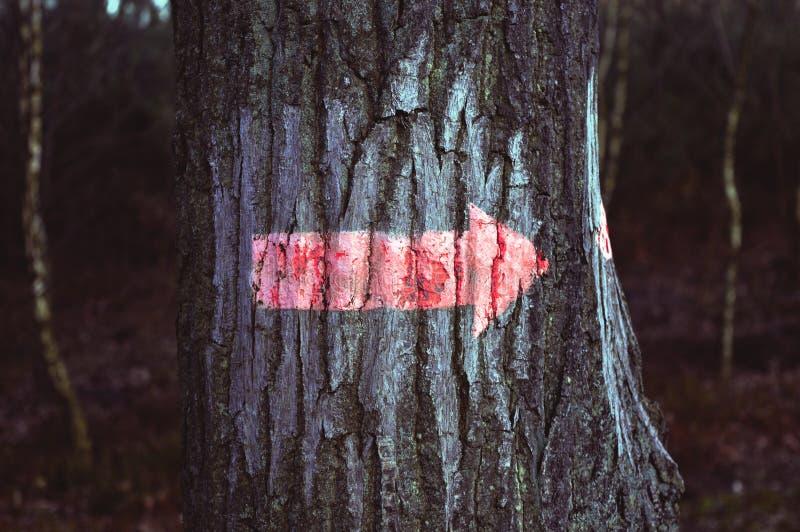 Знаки леса стоковые изображения rf