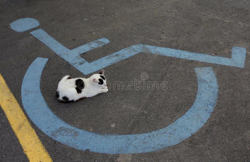 Знак гандикапа кресло-коляскы и кот спать стоковое фото rf