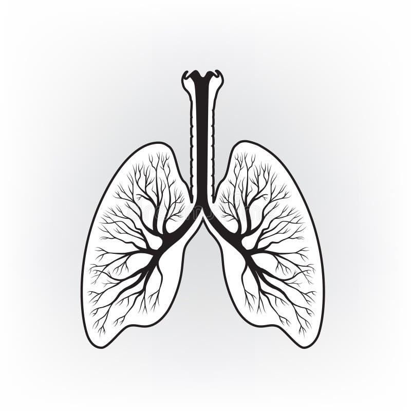 Внутренний орган легкие картина черно белая