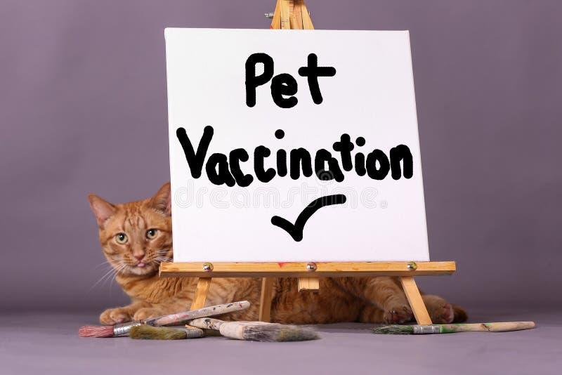 Знак проверки вакцинирования любимца с оранжевым котом tabby i предпосылка стоковое фото