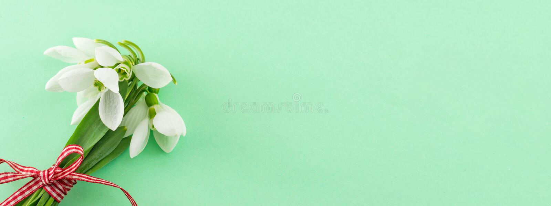 Знамя весны Свежий букет snowdrops стоковая фотография rf