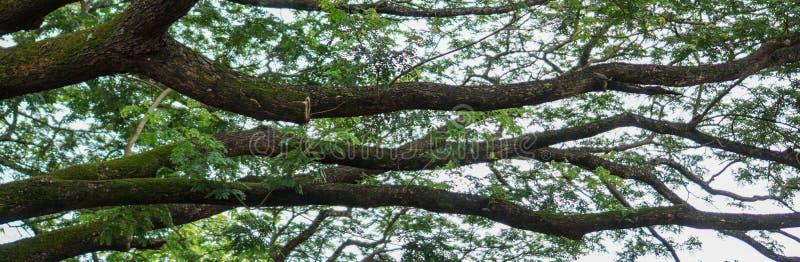 Знамя дерева с большими ветвями удлиняя вне стоковое изображение