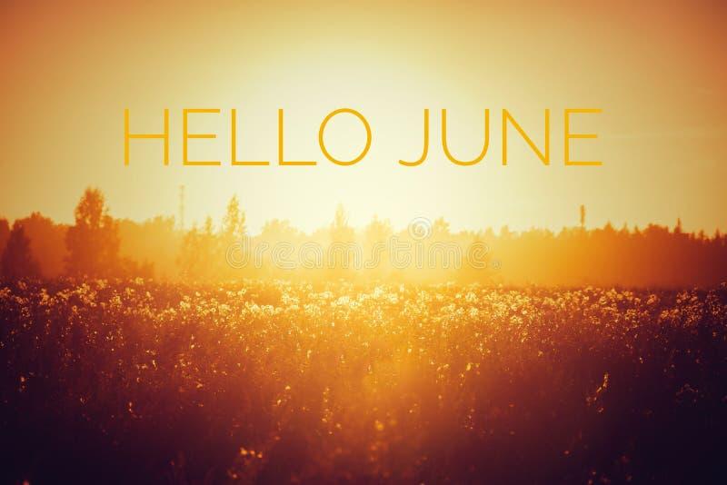 Знамя здравствуйте июнь Текст на фото Отправьте SMS здравствуйте июню Новый месяц Новый сезон Летний месяц Текст на фото захода с стоковые изображения rf