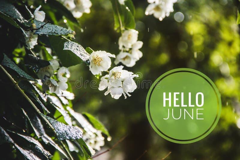 Знамя здравствуйте июнь Текст на фото Отправьте SMS здравствуйте июню Новый месяц Новый сезон Летний месяц Текст на фото цветков  стоковое фото