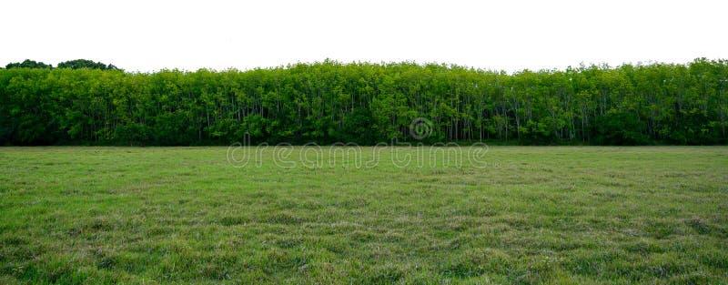 Знамя предпосылки дерева панорамы белое стоковое фото