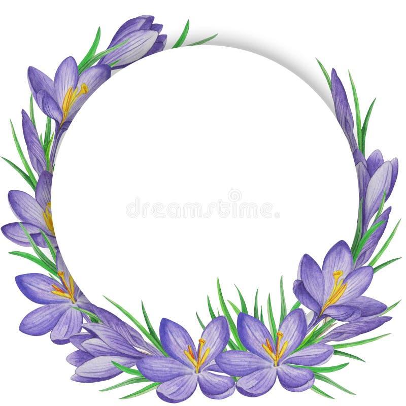 Знамя цветка весны крокусов желтый цвет акварели стародедовской предпосылки темный бумажный иллюстрация штока