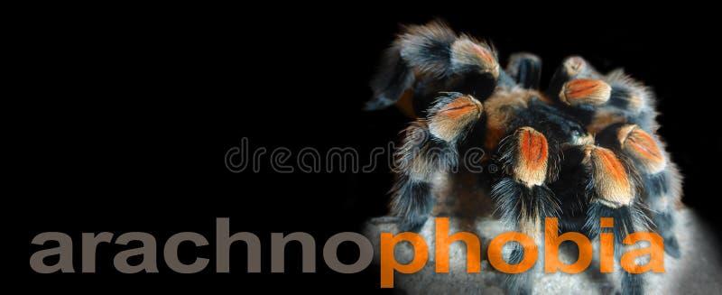 Знамя Arachnophobia - стоковая фотография rf