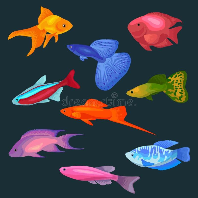 Значки иллюстрации вектора рыб аквариума установили изолированный на белой предпосылке иллюстрация штока