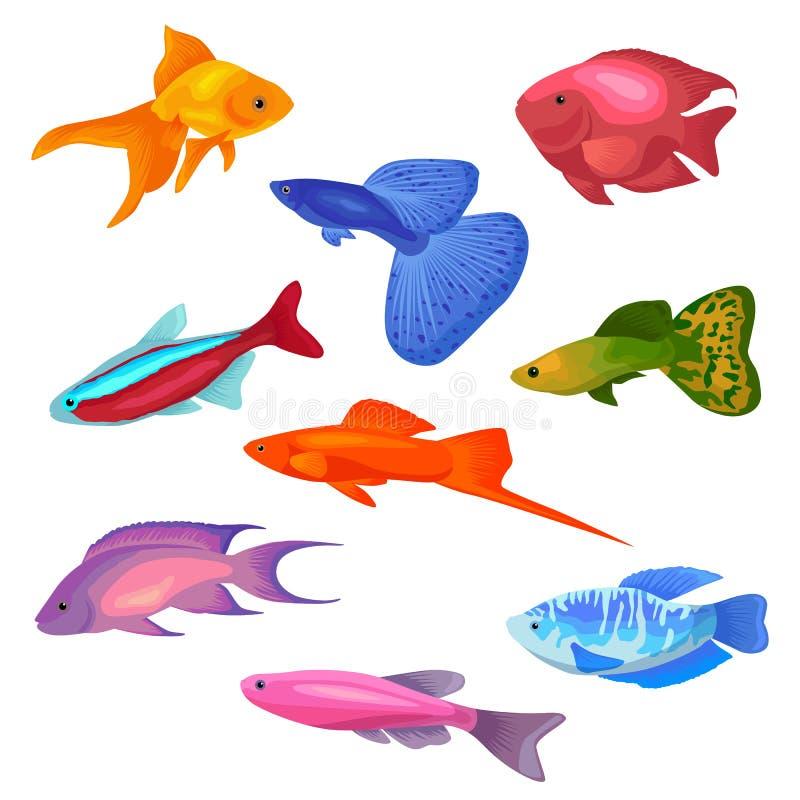 Значки иллюстрации вектора рыб аквариума установили изолированный на белой предпосылке иллюстрация вектора