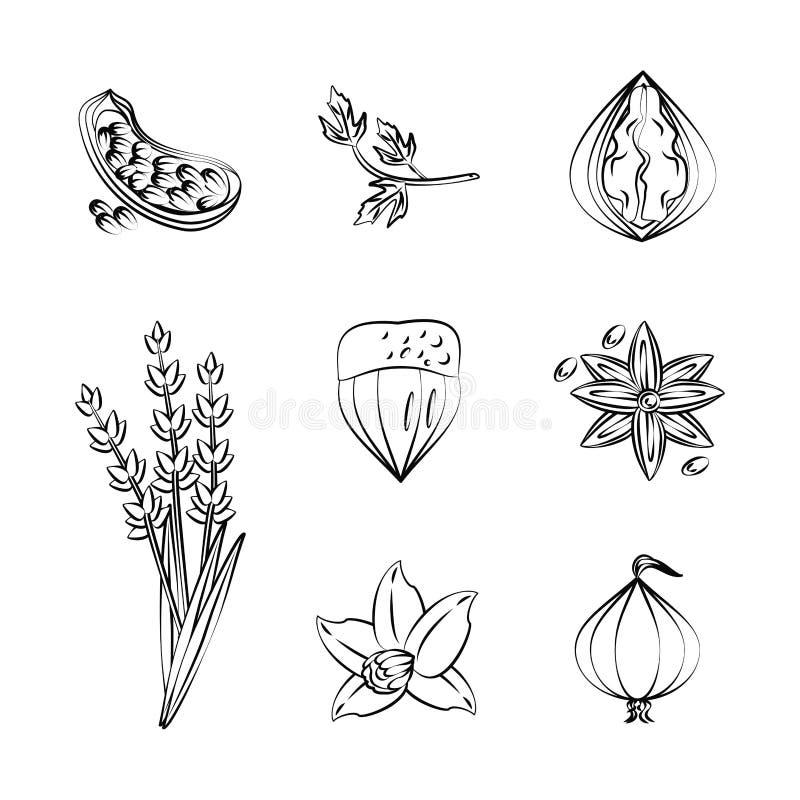 значки трав и специй иллюстрация вектора