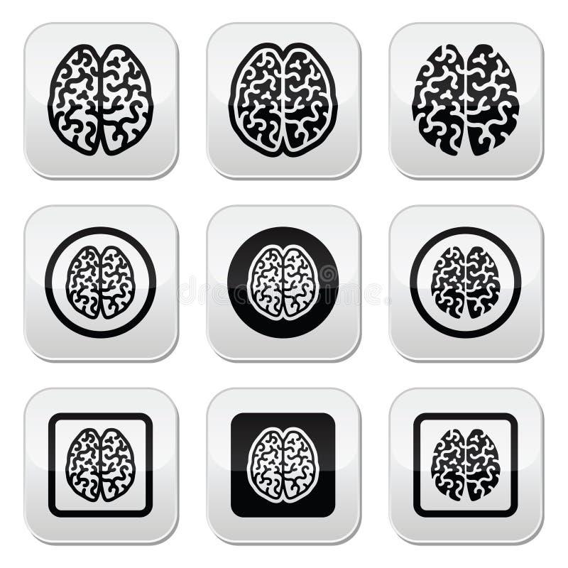 Значки человеческого мозга установили - разум, концепцию творческих способностей иллюстрация штока