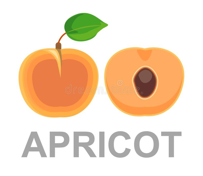 Значок абрикоса полностью и в отрезке абрикосы зрелые иллюстрация вектора