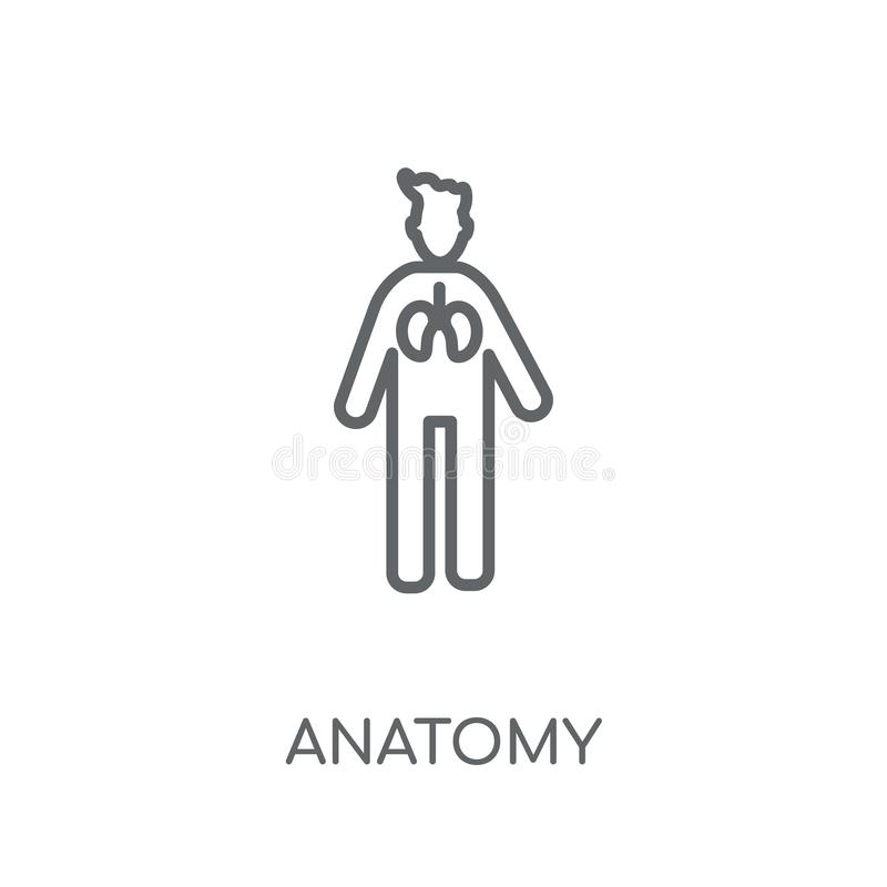 Значок анатомии линейный Современная концепция логотипа анатомии плана на whit иллюстрация штока