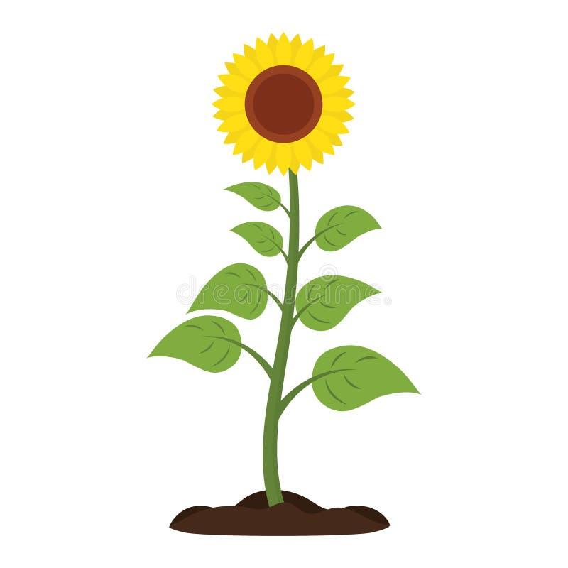 Значок вектора солнцецвета иллюстрация вектора