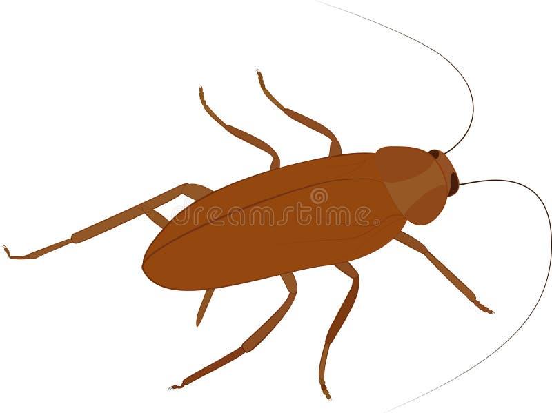 Значок вектора таракана насекомое шаржа изолированное на белизне бесплатная иллюстрация