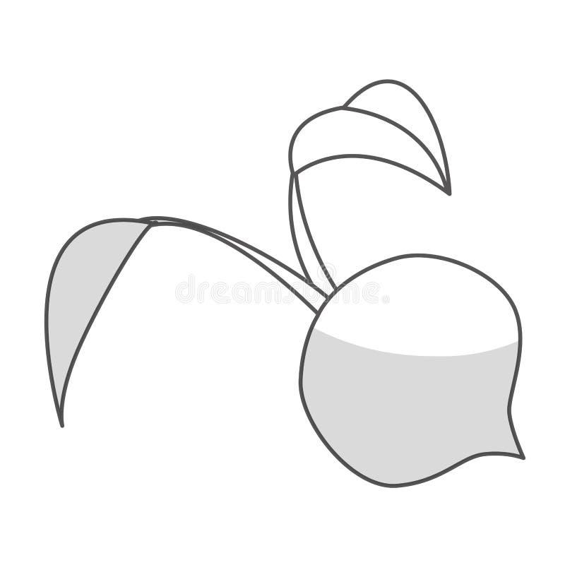 Download Значок овоща бураков иллюстрация вектора. иллюстрации насчитывающей свеже - 81802980