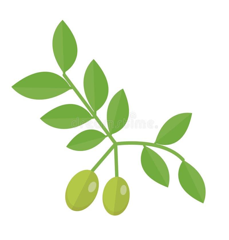 Значок оливковой ветки Зеленые оливки на стиле ветви плоском, оливки на белой предпосылке Прованский логотип также вектор иллюстр бесплатная иллюстрация