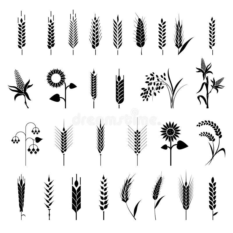 Значок хлопьев установил с рисом, пшеницей, мозолью, овсами, рожью, ячменем иллюстрация штока
