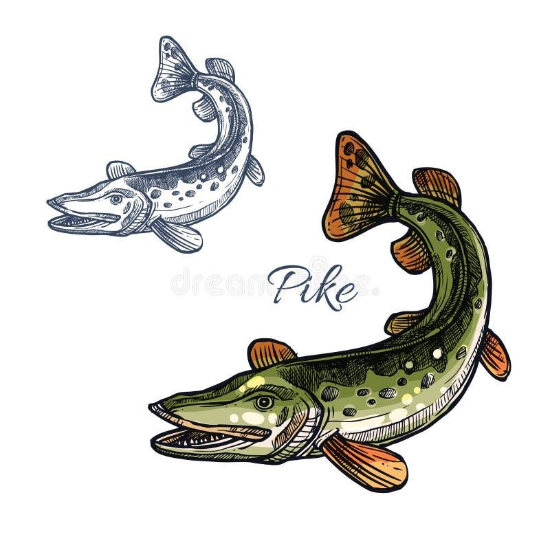 Значок эскиза рыб Pike изолированный вектором иллюстрация вектора