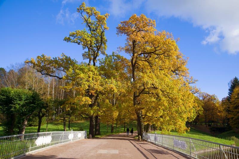 Золотая осень в парке Pavlovsky Район Санкт-Петербурга, России стоковое фото rf