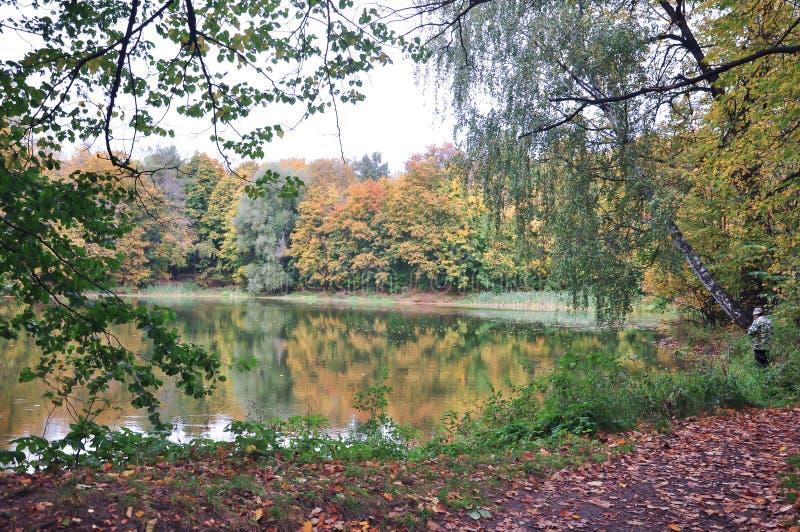 Золотая осень в старом парке стоковые фото