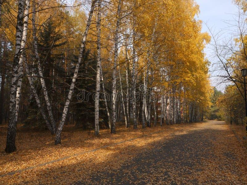 Золотая осень земли стоковое изображение